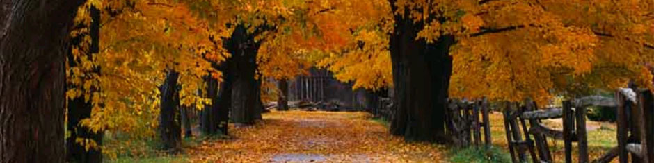 trees-fall