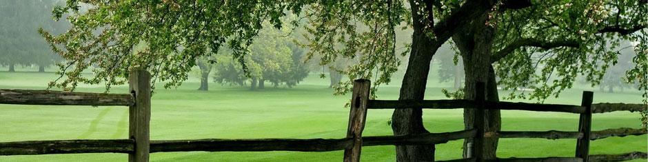 trees-spring